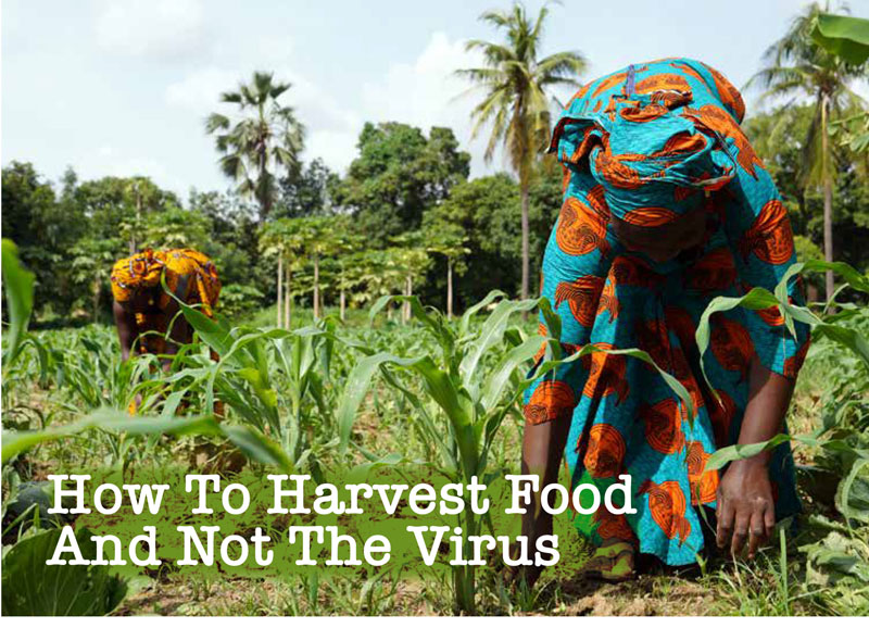 How To Harvest Food And Not The Virus
